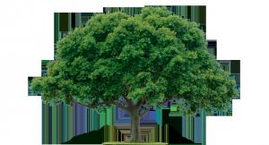 trees_suck_picture